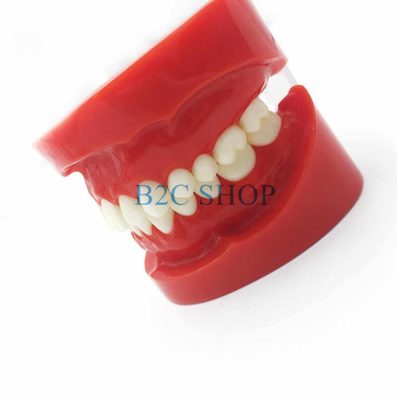 Prótese dental dentes modelo maxila padrão typodon demonstração dentadura modelo de ensino dental simulador técnico ferramentas