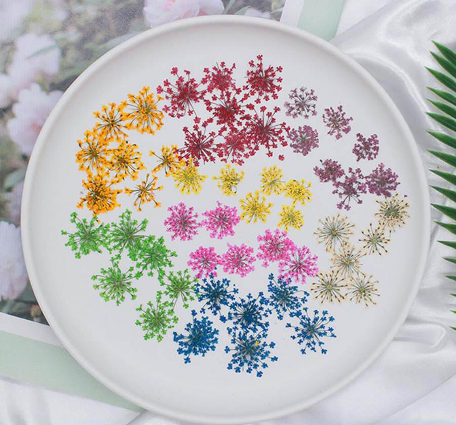 120pcs Dried Pressed 20-25mm Ammi Majus Flower Plants Herbarium For Jewelry Postcard Bookmark Phone Case Candle Scrapbook Making