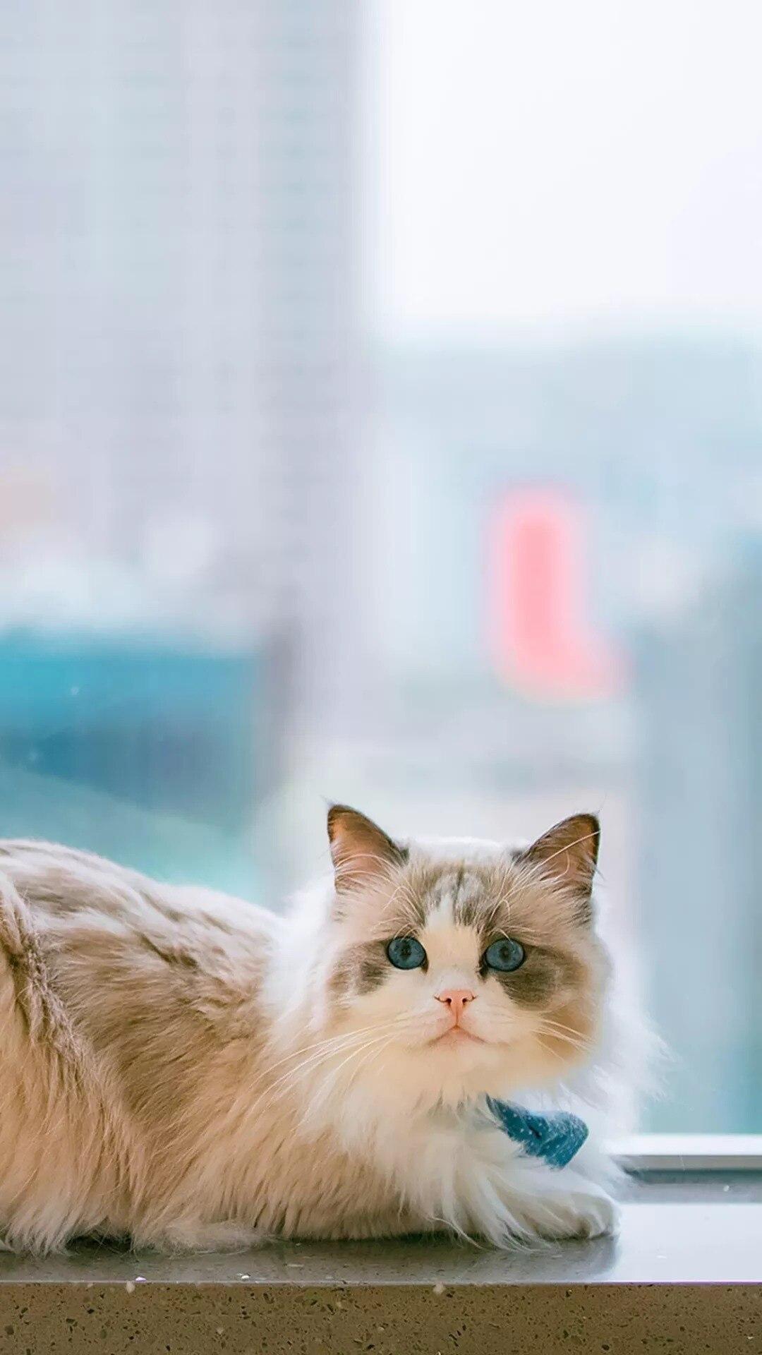 猫片壁纸 :生活不断拍打我们的脸皮,最后不是脸皮厚了,是肿了!插图85