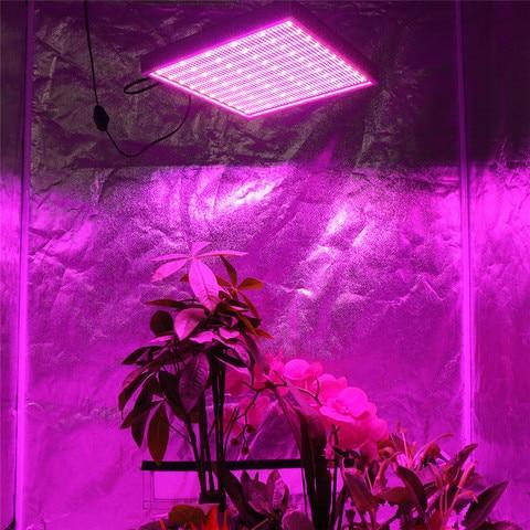 lampadas de crescimento