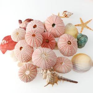 2/4 / 6Pcs Natural Sea Urchin Pink Sea Urchin Shell Design Conch Beach Wedding Decoration DIY Home Decoration 3.5-5cm