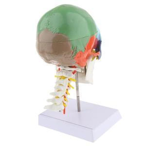 Image 2 - 1:1 色 22 部品人間の頭部の頭蓋骨と頚椎人間の解剖学的解剖骨格モデル医療ベージュ彫刻