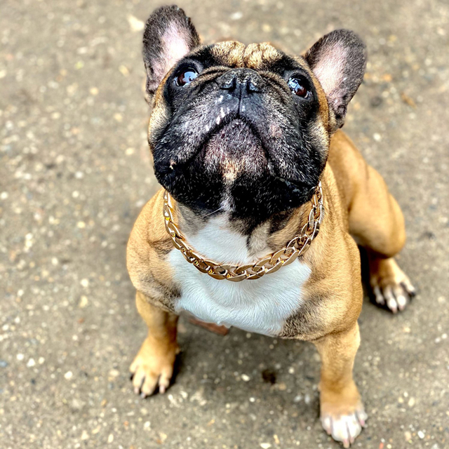 Pet Necklace Thick Gold Chain Plated Plastic Adjustable Dog Collar For Medium Large Dogs Bulldog Training Pets Accessories 5