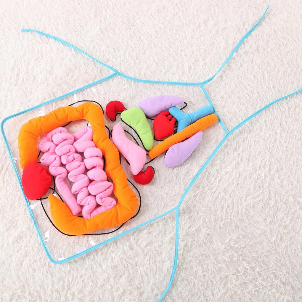 Pendidikan Baru Wawasan Mainan Anak Anatomi Apron Manusia Organ Tubuh Kesadaran Prasekolah Sekolah Rumah Mengajar AIDS