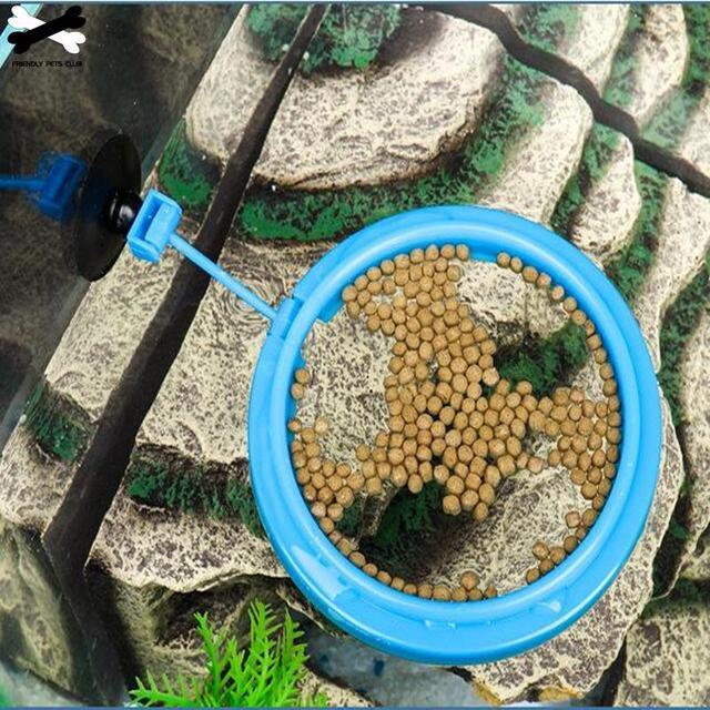 New Aquarium Feeding Ring 4