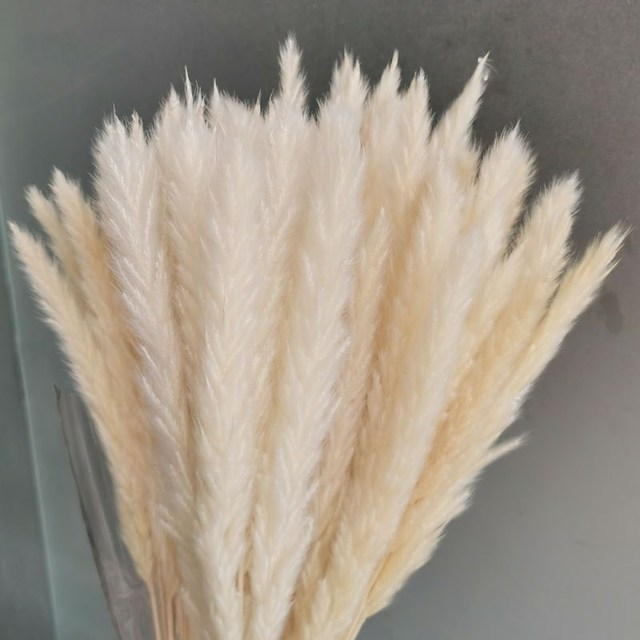 Fiori di pampa secchi decorazione 21