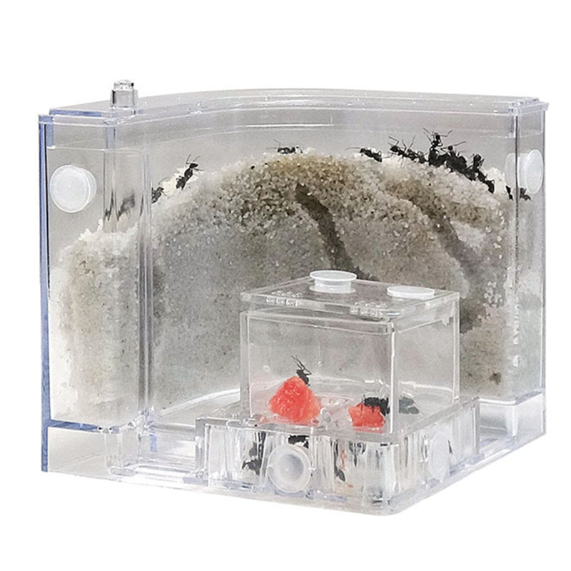 Free Sand Ant Farm Nest House With Feeding Area White Sand Acryl Insect Villa Funny Pets Educational Toys For School Student Kid
