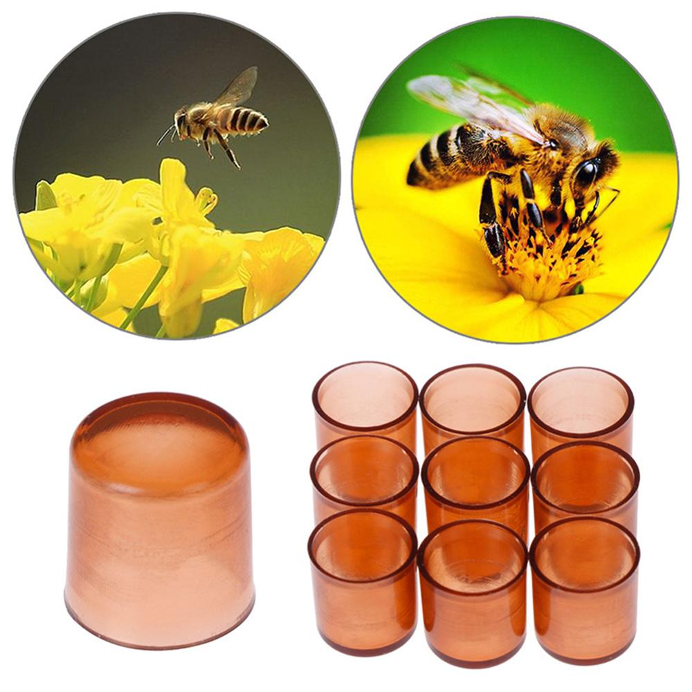 1000 PCS Bee Queen Rearing Plastic Brown Cells Cages Room Cups Beekeepers Equipment With Smooth Surface