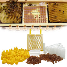 Germany Jenter Queen Rearing Kit Nicot Bee Queens Rearing System Queen Bee Larva Move Cage Goods Tool For Beekeeper Supplies