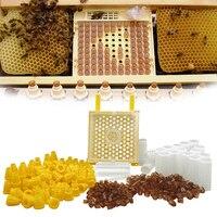 Kit de cría de abejas de Jenter Queen de Alemania, sistema de cría de abejas Nicot, Larva de abeja reina, jaula de transporte, herramienta de productos para Apicultor