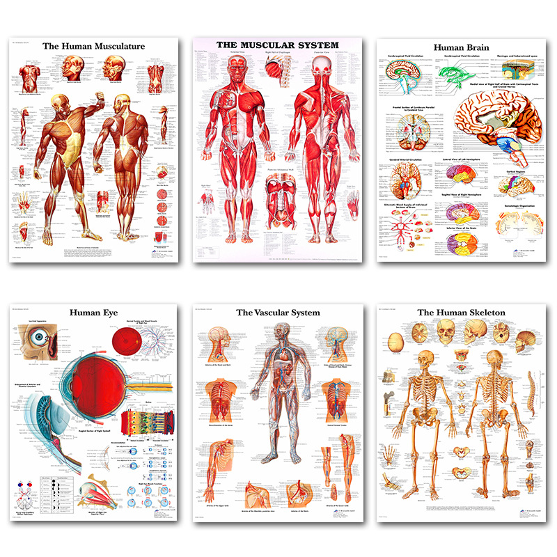 Silk Painting Art-Poster Wall-Pictures Muscles-System Body-Map Print Human-Anatomy Office