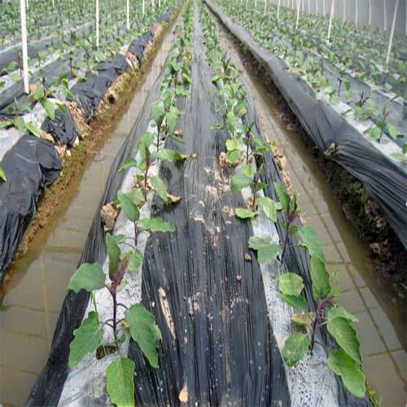 5 メートル 2 行白農業黒フィルム野菜植栽プラスチックマルチングフィルム植物害虫雑草防除保温成長フィルム