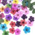 50 шт 6 мм Мини прессованный высушенный Нарцисса сливы цветок для изготовления ювелирных изделий для ногтей искусство ремесла Сделай Сам руч...