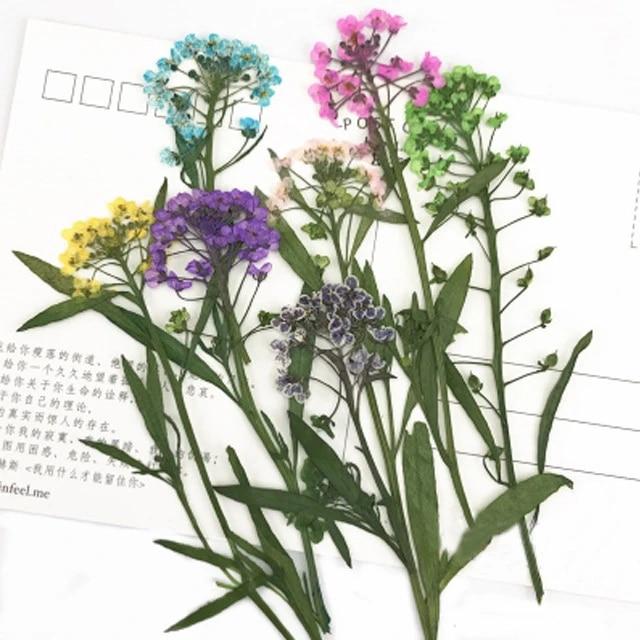 Alyssum Natural Dried Flower Arrangements For Diy Handicraft 60pcs Artificial Dried Flowers Aliexpress