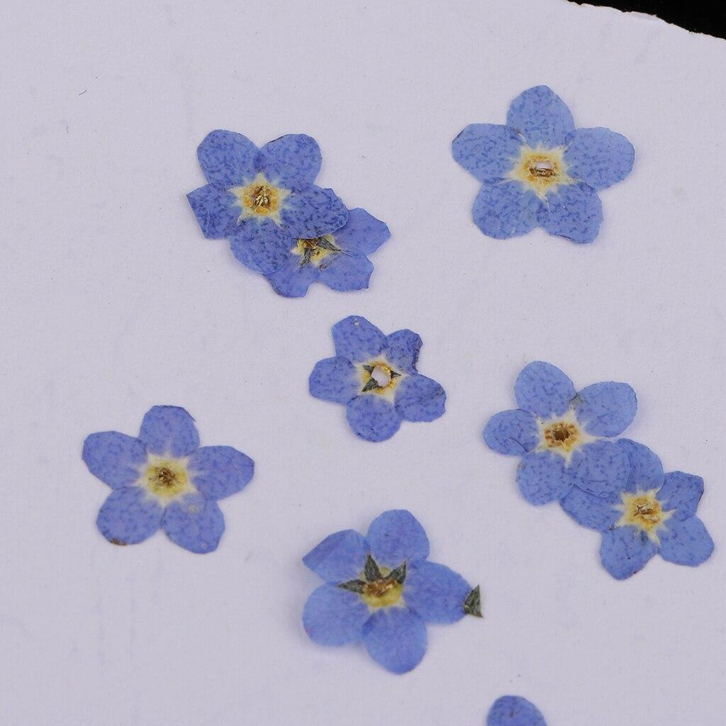 50 шт. натуральный забытый цветы, прессованный высушенный цветок для творчества
