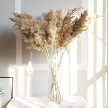 Natural Dried Pampas Grass Phragmites Communis for Wedding Artificial Flower Bunch Home Decor DIY Craft dry flowers decoration 50pcs real dried small pampas grass wedding flower bunch natural plants home decor dried flowers phragmites flower ornamental