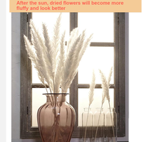 TINEMET Natural Dried Pampas 20Pcs, Dried Pampas Grass Wedding Home Decor Natural Dried Decorative