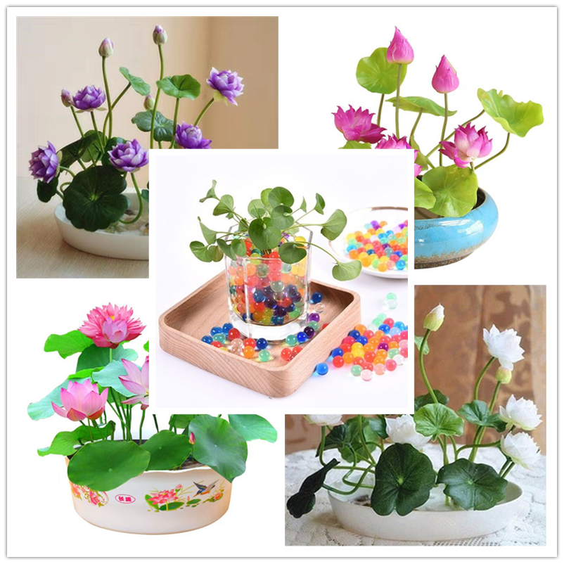 More clicks to enter Plant flowers fruit VIP gift Crystal Mud Hydrogel Crystal Soil potted bonsai Soil Grow Balls Kid's Toy lotu image