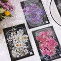 JIANWU 40 Pcs Shanye Schimmernde Serie Sticker Pack Natürliche Pflanzen Blume PET Kawaii Aufkleber Scrapbooking Dekorative Schreibwaren