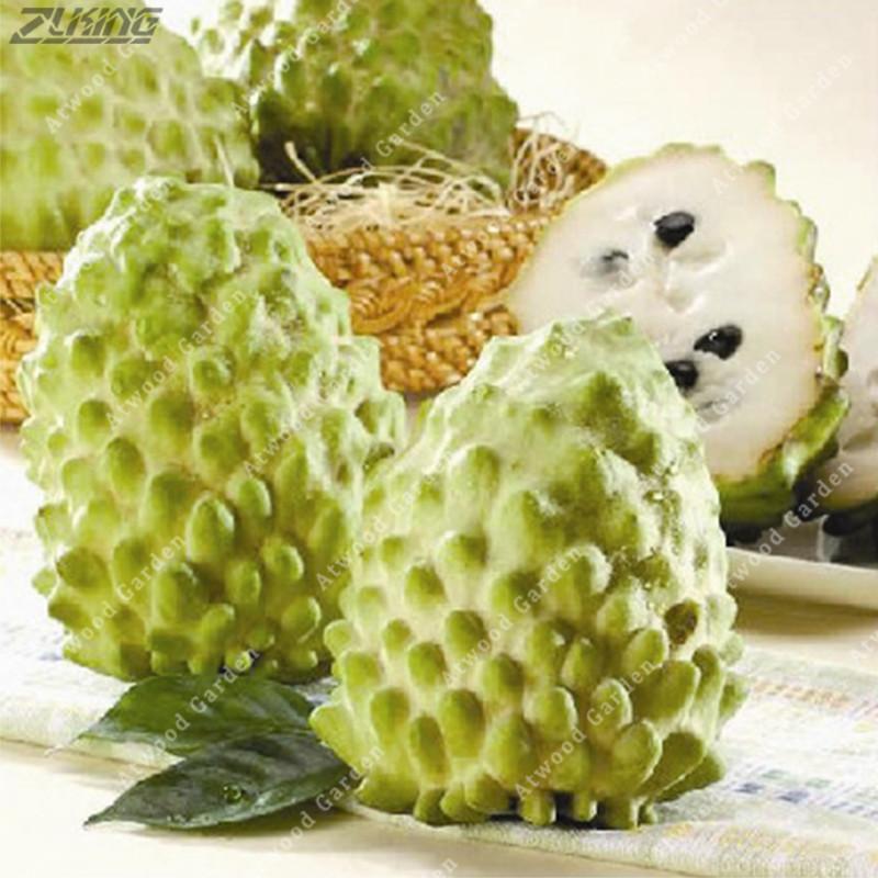 10 Pcs Soursop Fruit, (graviola Annona Muricata), Multi-color Sweetsop  Delicious Fruit  Sugar Apple