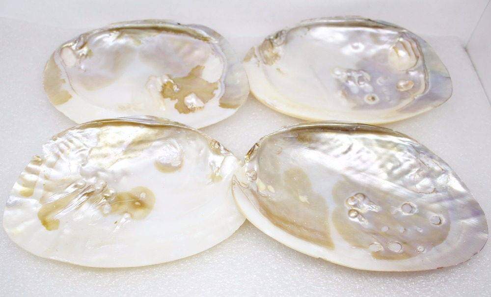 Купить с кэшбэком 1 PCS Collection 100mmX140mm Natural Mother of Pearl Shell Baroque Clam Display