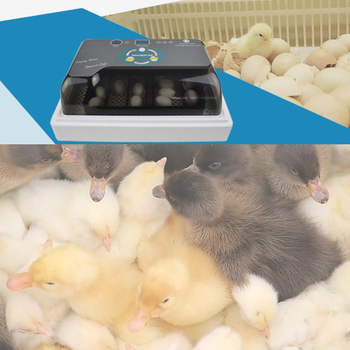Automatic LED Digital Egg Hatching Incubator Made Of High-Quality ABS Material Suitable for Various Eggs