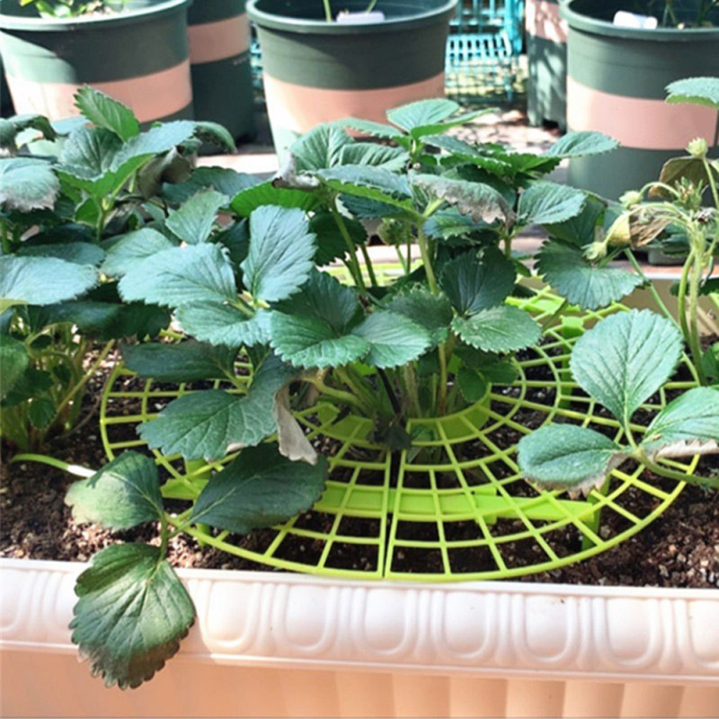 1PC Strawberry Stand Frame Holder Balcony Planting Rack Fruit Support To Keep Strawberries Off Rot In The Rainy Days
