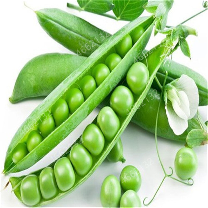 Plant Bath Salts 80Pcs Green Beans Essence NZW-01