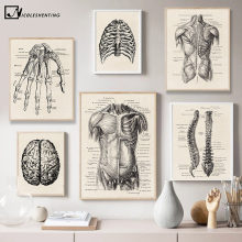 Cuadros de anatomía humana para decoración, pinturas de arte médico con esqueleto y músculos de estilo vintage, lienzo nórdico, para pared, ideales para educación y decorado