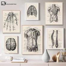 Arte de Anatomía Humana imagen de pared médica músculo esqueleto Vintage cartel nórdico lienzo impresión pintura educativa decoración moderna