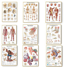 Human Anatomy Muscles System Canvas Painting Art Poster Print Body Map Canvas Wall Pictures for Science Medicine Bedroom Decor