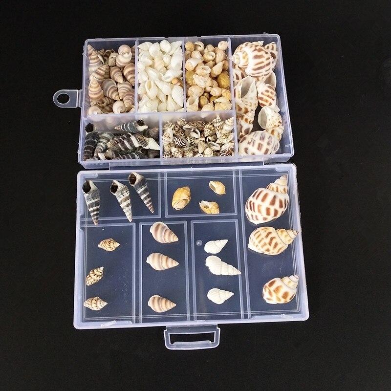 About 200Pcs/Box   Seashells Crafts Party  Natural Conch Shells Mini Conch Corn Screw Wall Decoration DIY Aquarium Landscape