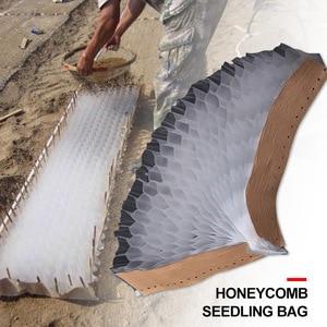 Honeycomb Green Vegetable Seed