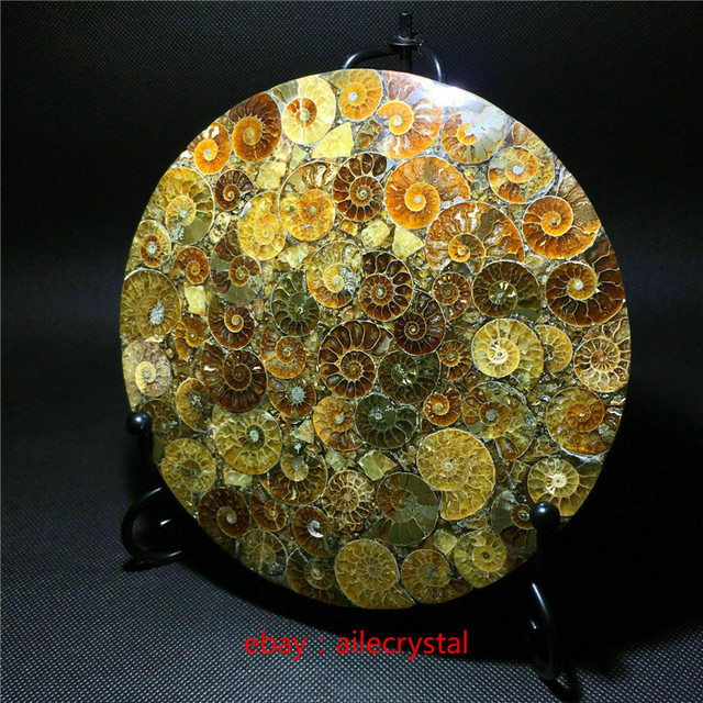 Natural Ammonite Disc Fossil Conch Specimen Healing +Stand 1pcs 3