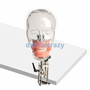 Image 1 - Dental simulator Nissin manikin phantom head Dental phantom head model with new style bench mount for dentist education