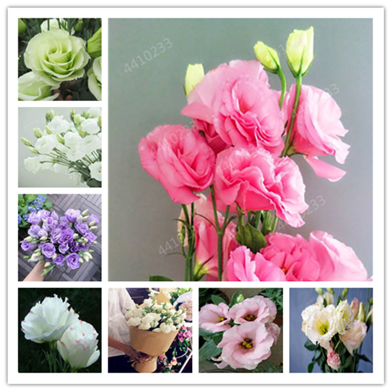 200 Pcs / Bag,rare Eustoma Flower, Potted Plant, Lisianthus Flower Plant, Variety Complete,the Budding Rate 95%, (Mixed Colors)