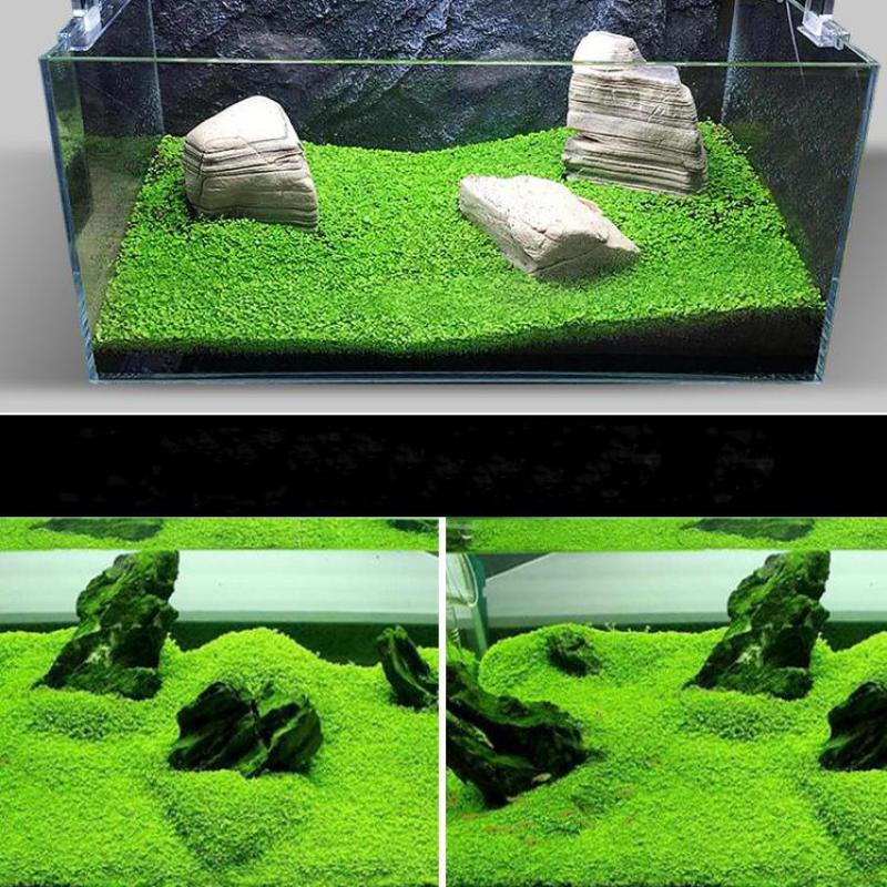 Easy Growing Mini Leaf Aquarium Plant Glossostigma Aquarium Water Plant Grass Lawn For Fish Tank Decoration Background