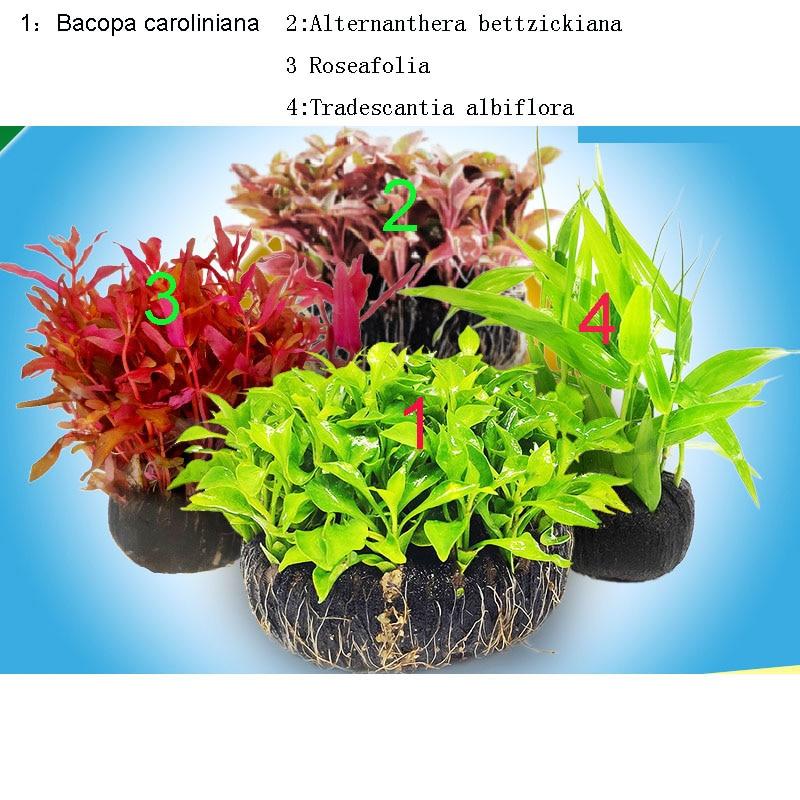 Aquarium Aquatic Plants Living Freshwater Grass Scenery One 1piece Per 4 Items