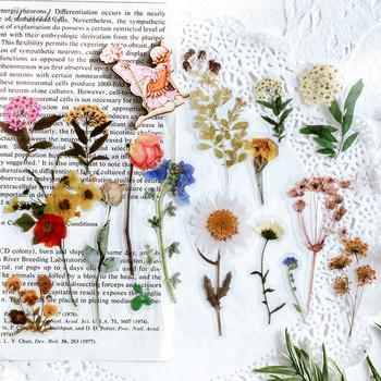 40 sztuk worek Vintage Ginkgo liście kwiaty PET naklejka pakiet DIY pamiętnik Bullet Journal naklejka dekoracyjna album scrapbooking tanie i dobre opinie LD270
