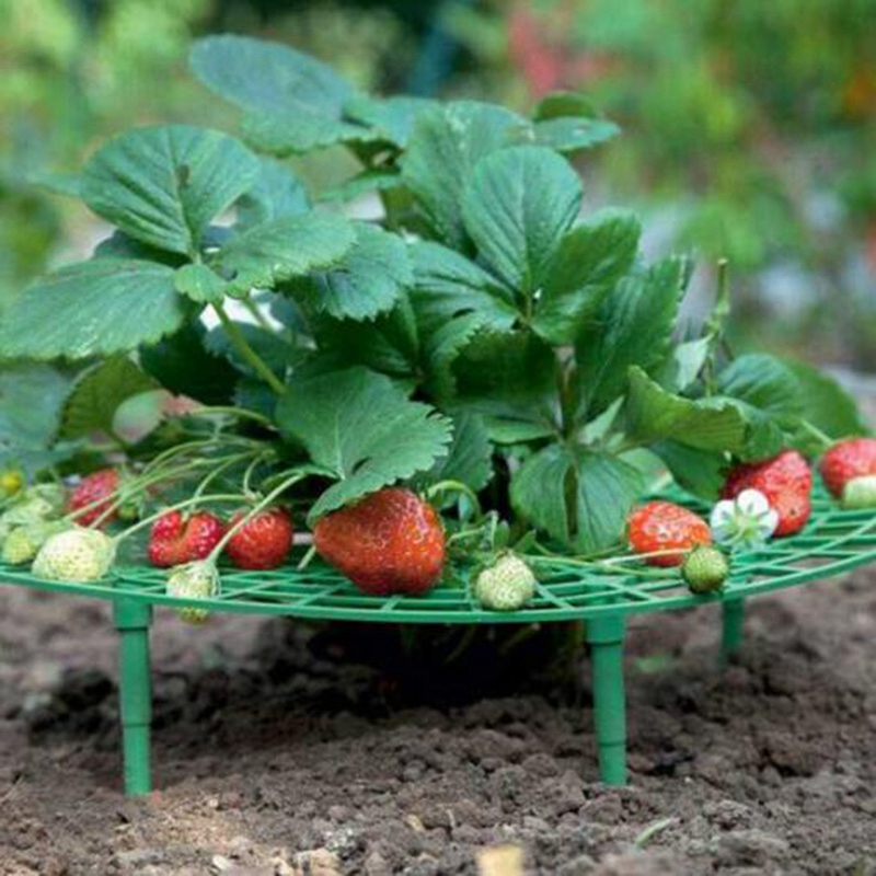 12PCS Strawberry Frame Holder Balcony Planting Rack Fruit Support Plant Flower Climbing Vine Pillar Gardening Stand