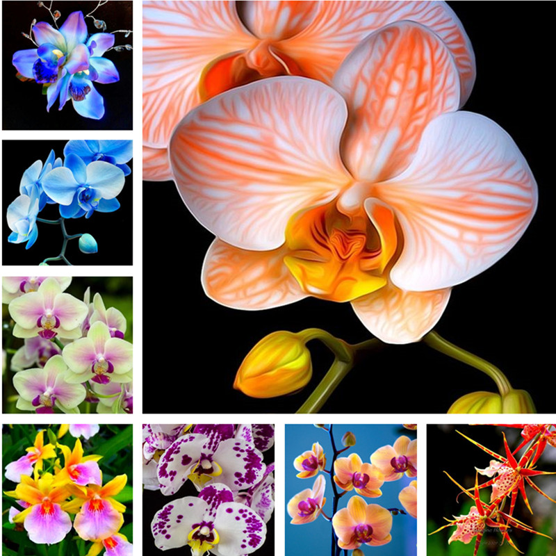 Orchid 100pcs Perennial Flower Phalaenopsis Bonsai Bonsai Home Garden Four Seasons Bonsai Flower Plants Easy To Grow