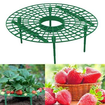 5 10 20 sztuk truskawka stojak uchwyt ramki balkon sadzenia stojak na owoce wsparcie roślin kwiat wspinaczka winorośli filar ogrodnictwo stojak tanie i dobre opinie