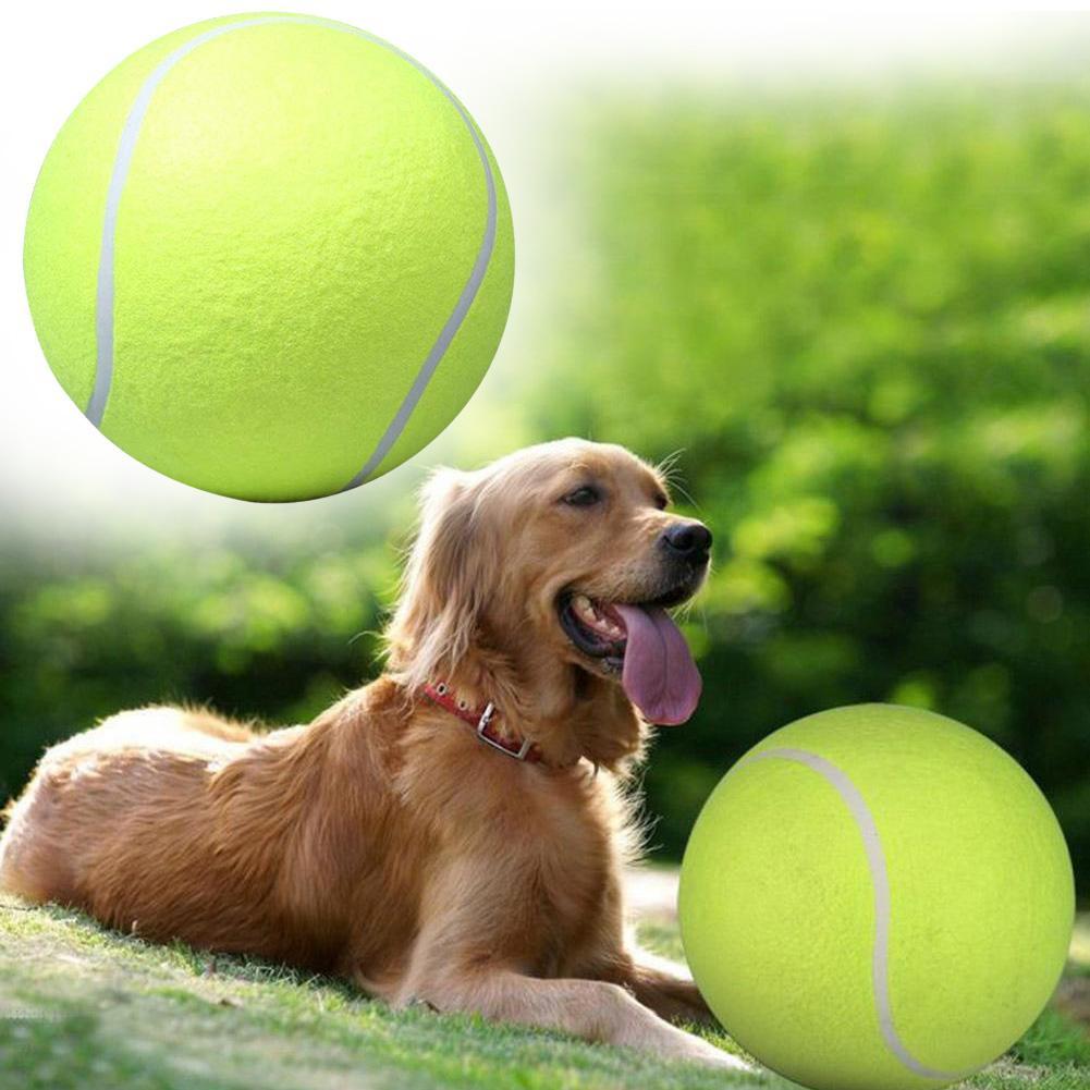 Mga resulta ng larawan para sa Pet Play Tennis Ball