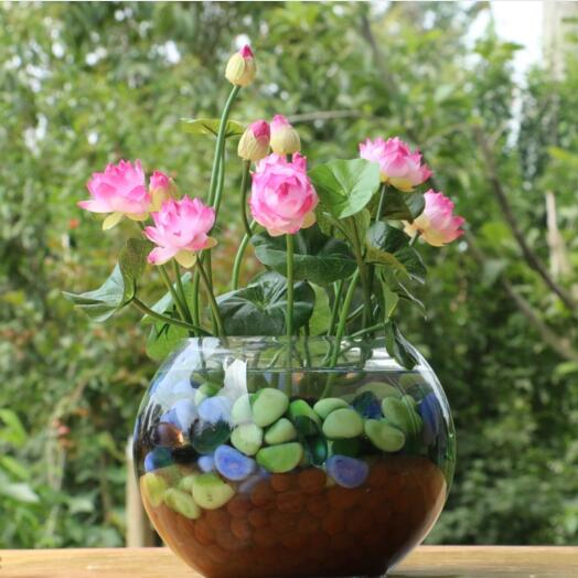 Bowl Lotus/water Lily Flower /Bonsai Lotus Plant/Sapphire Lotus Garden Decoration Pot 5pcs/bag