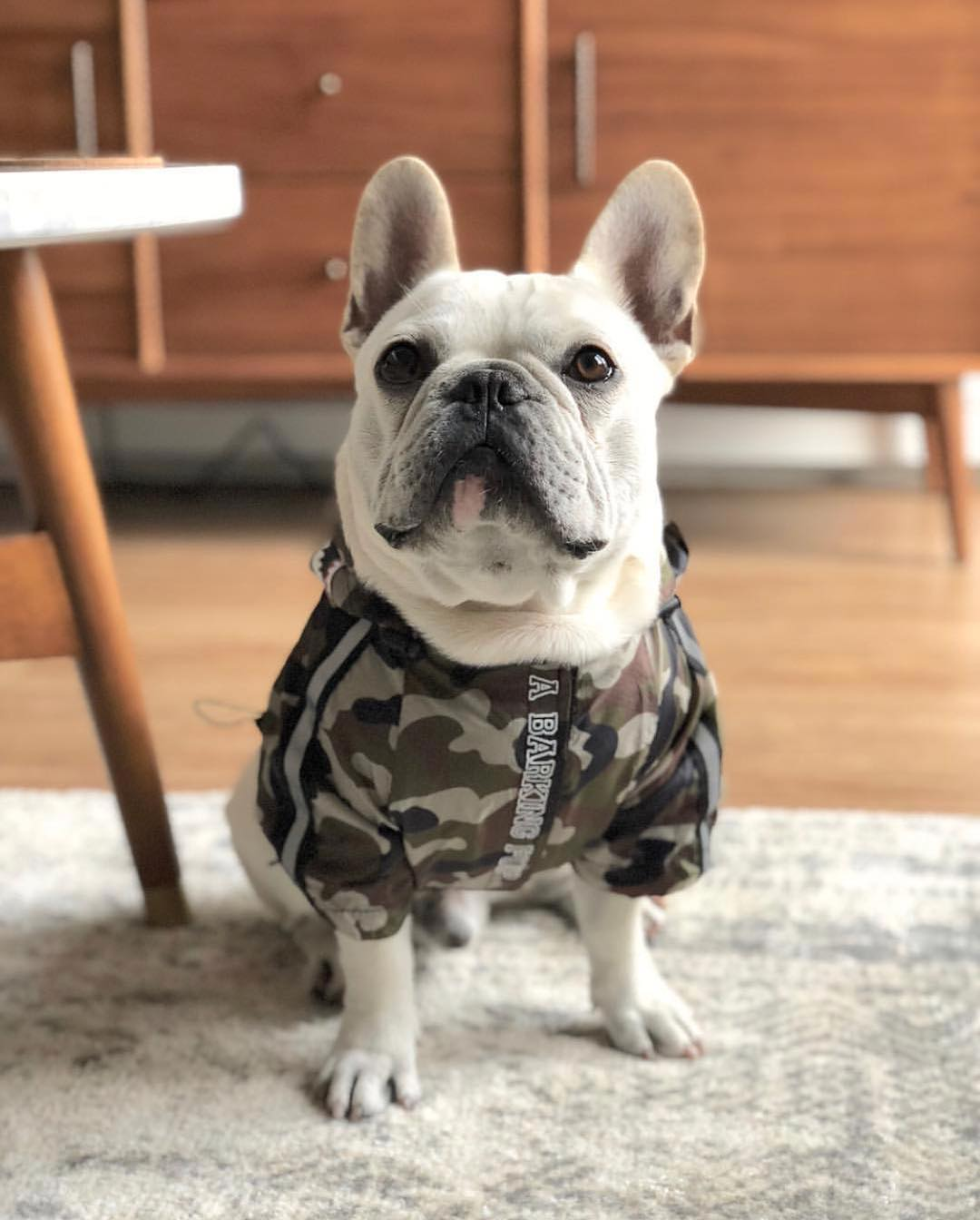 Dog Clothes Camouflage 19