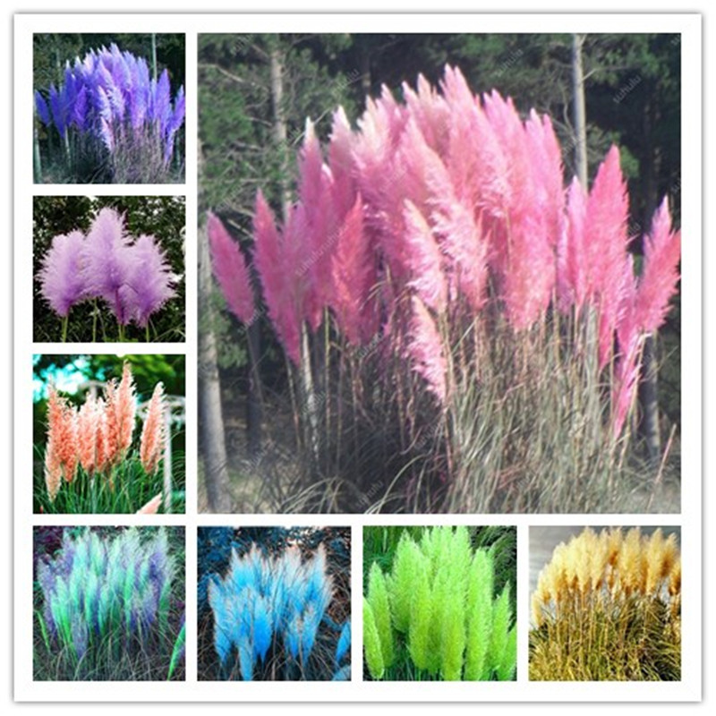 Plant Bath Salts 200Pcs Pampas Grass Essence