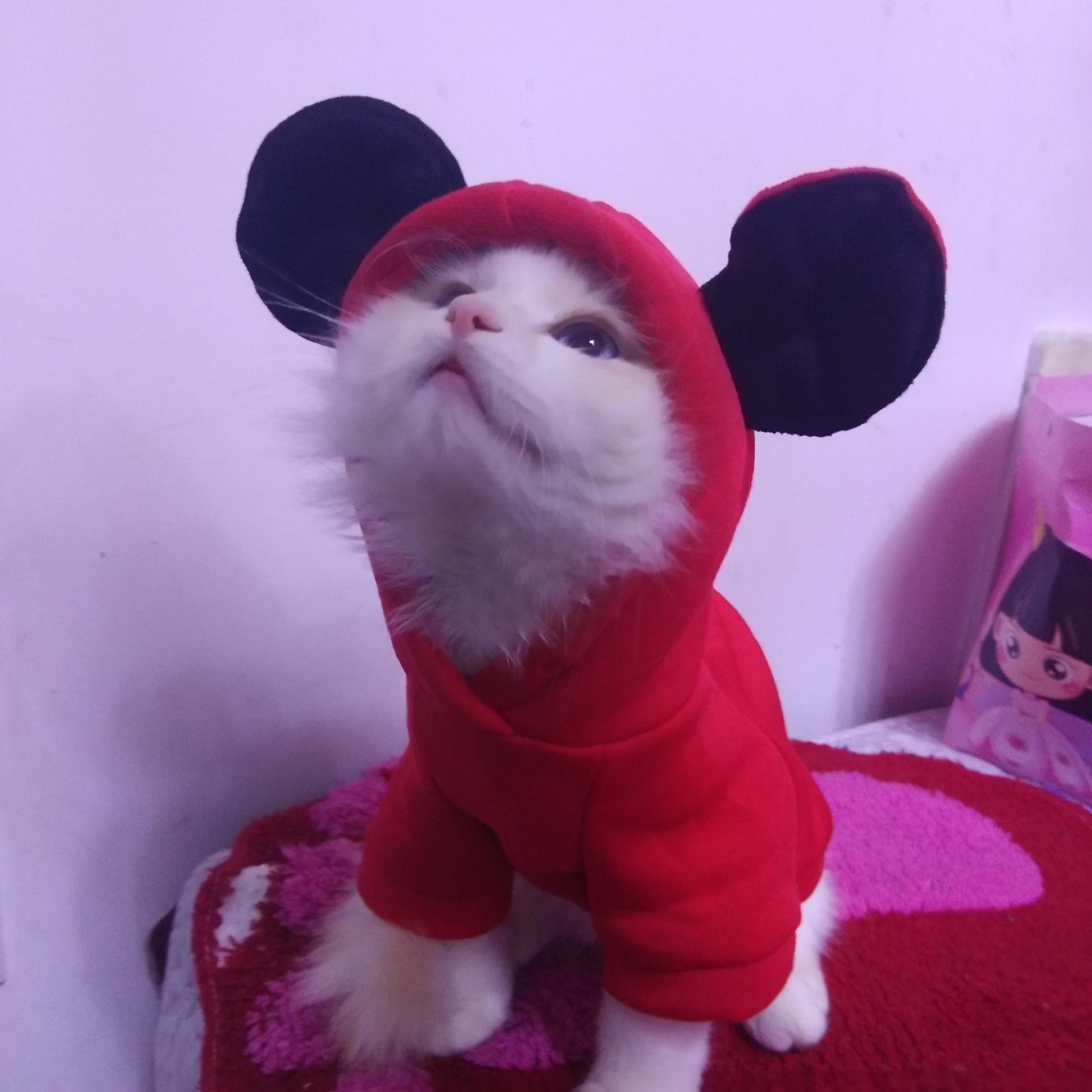Mickey Hoodies Cat Clothes Security Pet Coats Jacket Cute Puppy Kitten Minnie Little Cat Outfit Chihuahua Yorkshire Clothing 2XL 4