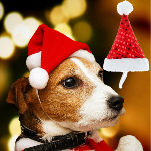 Merry Christmas Small Plush Santa Hat for Pet Dog Cat Hat New Year Decoration Cap DIY Headgear Costume Accessories