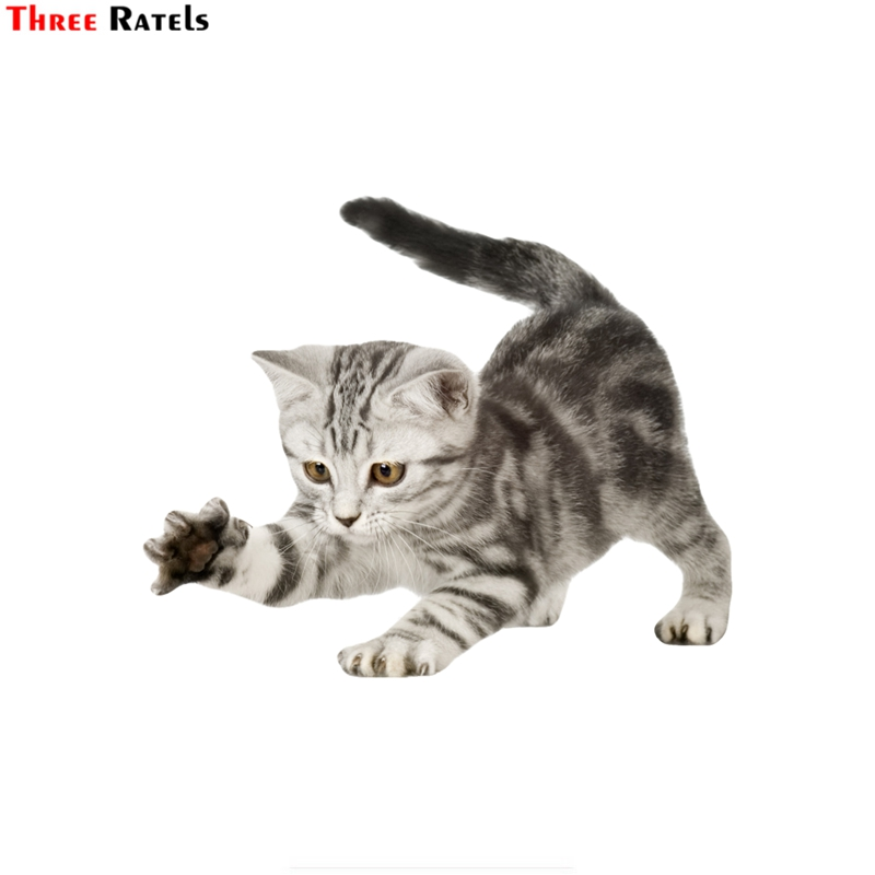 Three ratels FTC-757#14x17cm American Shorthair cat kitten scratching window wall auto motorcycle car sticker decal