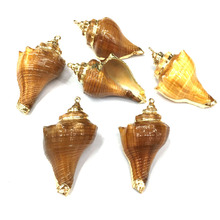 5Pcs New Natural Shell Conch Pendants Charms For Jewelry Making DIY Supplies Neckalce Bracelet Accessories Wholesale